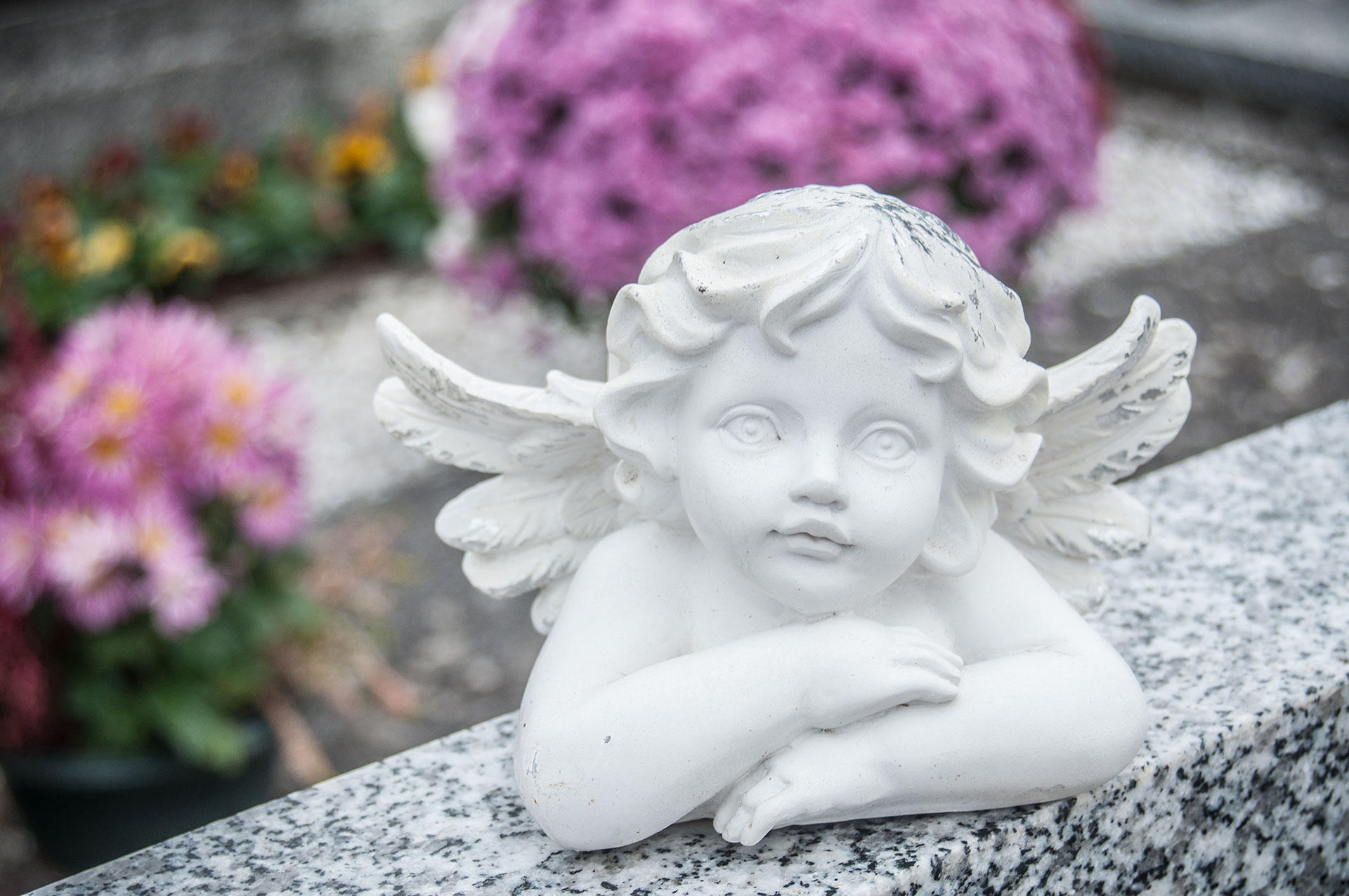 Mary Ann Holt Celebrant Funerals Adelaide Funerals